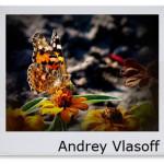 Andrey_Vlasoff