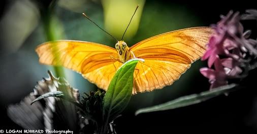 Butterfly Logan Hubbard