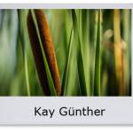 Kay Günther