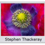 Stephen Thackeray