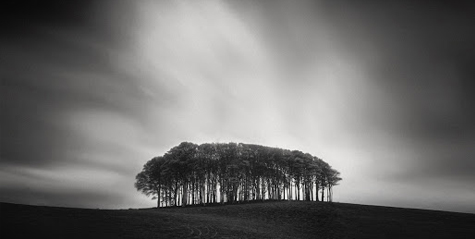 Bunch of Trees by Andy Lee